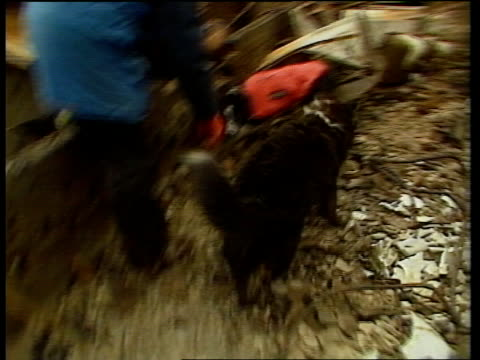 wreckage search itn scotland lockerbie side rescue worker standing on pile of rubble as border collie sniffer dog donna next pull out more rescue... - lockerbie stock videos & royalty-free footage