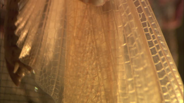 a locust clings to wire mesh. - gliedmaßen körperteile stock-videos und b-roll-filmmaterial