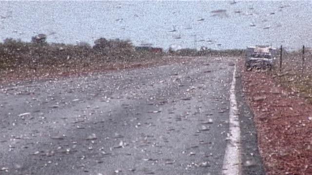イナゴペスト - 虫の群れ点の映像素材/bロール