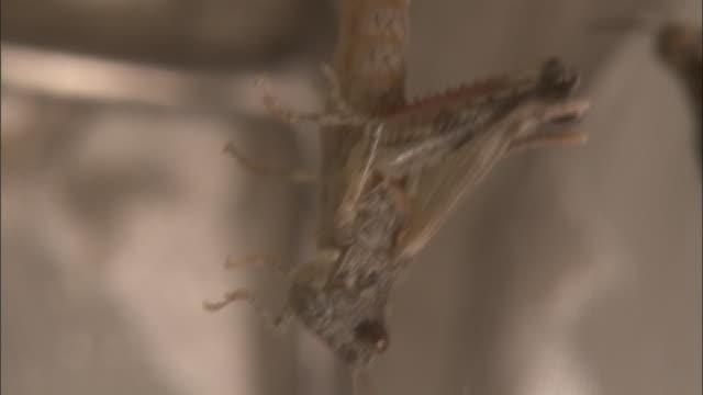 a locust sheds its skin. - 外骨格点の映像素材/bロール