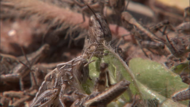 locusts eat a flowering plant. - flowering plant stock videos & royalty-free footage