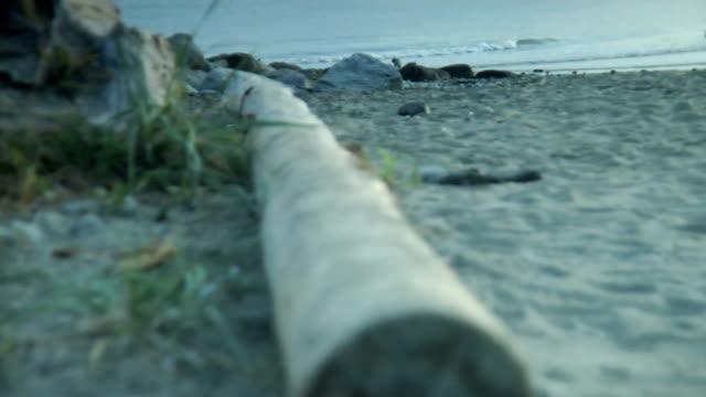 protokoll 2 - baumstumpf stock-videos und b-roll-filmmaterial