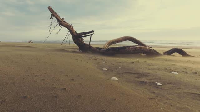 stockvideo's en b-roll-footage met log at beach. - drijfhout