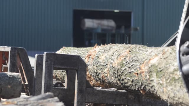 A log grapple and rotator move uncut logs into stacks in the yard at the sawmill of the Doll Lumber Co in Southington Ohio US Uncut lumber sits...