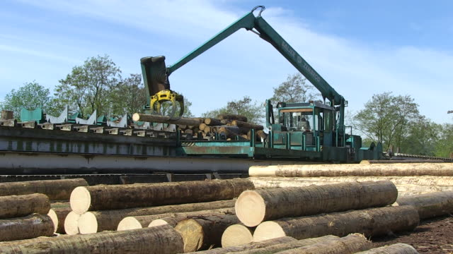 MS PAN Log moving through log lift crane in lumberyard at saw mill / Schweich, Rhineland Palatinate, Germany