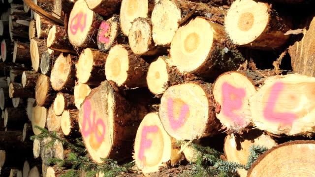 A log pile of freshly cut timber in Grizedale fore
