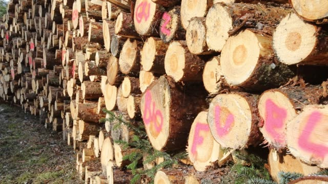 log pile of freshly cut timber in grizedale forest, lake district, uk, that is destined to be used as biofuel in a biofuel power station. - evergreen stock videos & royalty-free footage