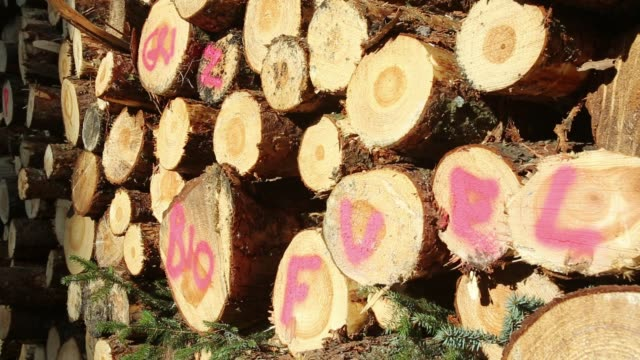 A log pile of freshly cut timber in Grizedale forest, Lake District, UK, that is destined to be used as biofuel in a biofuel power station.