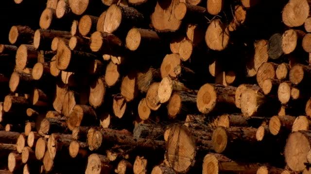 Log pile of pine trees
