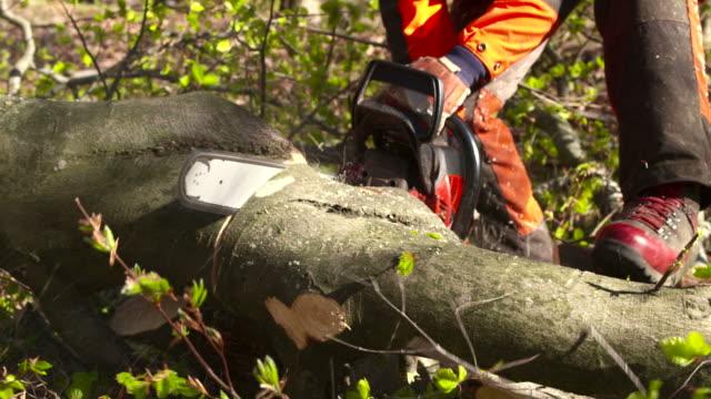 hd: logger bucking a felled tree - fallen tree stock videos and b-roll footage