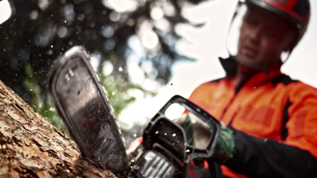 slo mo ld logger bucking a tree with a chainsaw - chainsaw stock videos & royalty-free footage