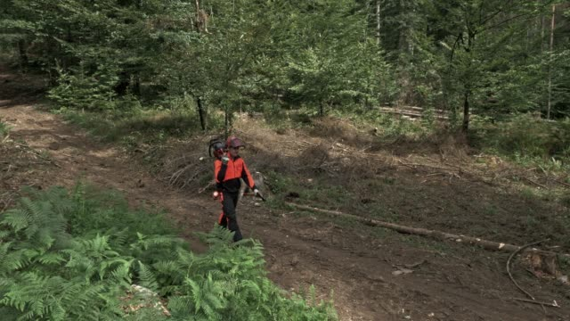 AERIAL Logger carrying a chain saw walking to the logging site