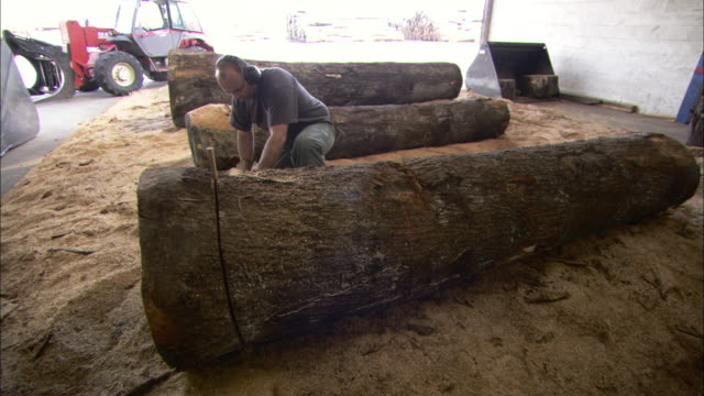 a logger cuts through a massive oak log with a chainsaw. - 農林水産関係の職業点の映像素材/bロール