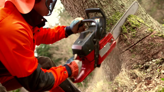 hd: logger cutting a humbolt notch - fallen tree stock videos and b-roll footage