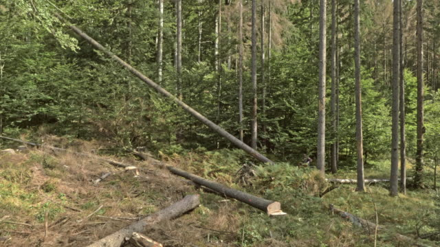 aerial logger cutting down a tree at a logging site - moving down stock videos and b-roll footage