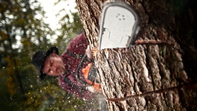 slo mo logger styckning i ett träd med motorsåg - hängslen bildbanksvideor och videomaterial från bakom kulisserna