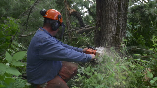 ms logger cutting tree, stowe, vermont, usa - only mature men stock videos & royalty-free footage