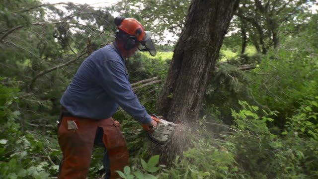 ms logger cutting tree, stowe, vermont, usa - chainsaw stock videos & royalty-free footage
