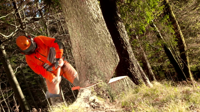 hd: logger felling a tree - lumberjack stock videos & royalty-free footage