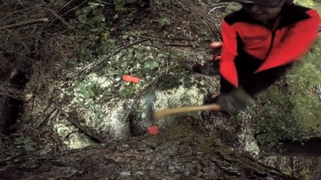 vídeos y material grabado en eventos de stock de registrador de ld insertar tala cuñas en un árbol con un martillo - industria forestal