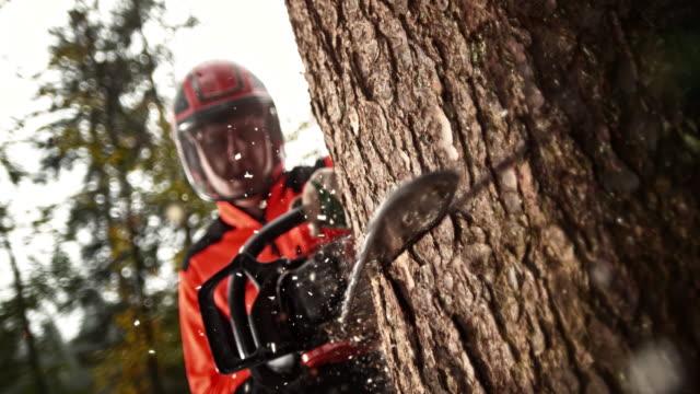 vídeos de stock, filmes e b-roll de slo mo logger fazendo um corte na árvore com uma serra elétrica - forester