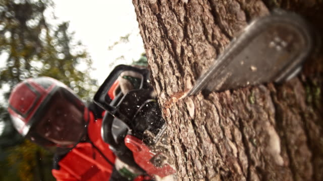 slo mo logger making a cut with a chainsaw - industria forestale video stock e b–roll