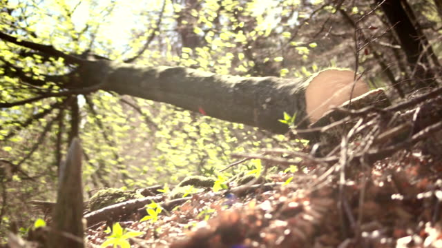 hd: logger pushing down a tree - chopped stock videos and b-roll footage