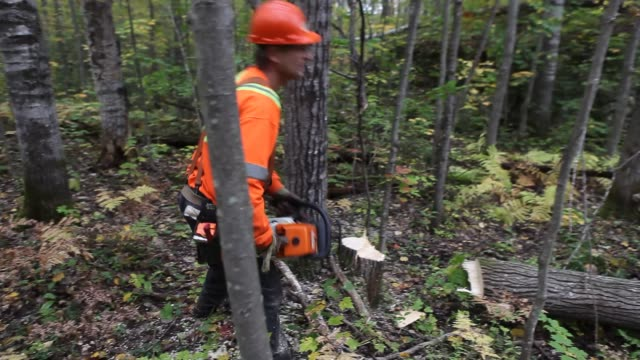 logger uses a chainsaw to cut down trees during a logging operation in ontario, canada. - forestry industry stock videos & royalty-free footage