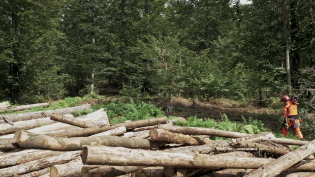 vídeos y material grabado en eventos de stock de registrador aéreo caminando en el bosque con una sierra de cadena - leñador
