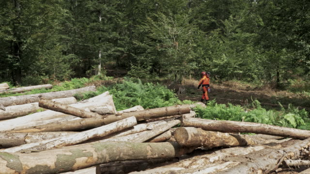 aerial logger with a chain saw entering the woods - log stock videos & royalty-free footage