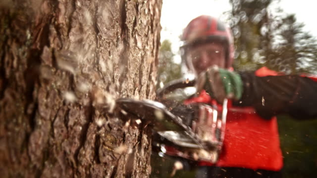 SLO MO LD Logger with a chainsaw cutting into a tree