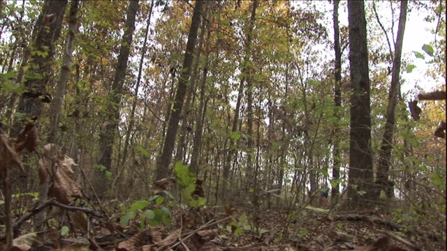 a logger works in a deciduous forest. - deciduous stock videos & royalty-free footage