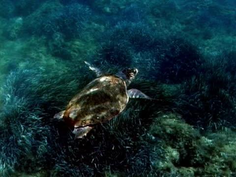 loggerhead turtle (caretta caretta) swimming in dappled light, greece, mediterranean - dappled light stock videos and b-roll footage