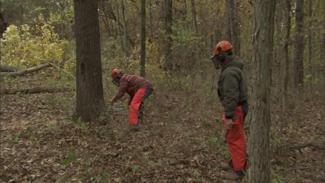 vidéos et rushes de loggers cut down trees in missouri. - bûcheron