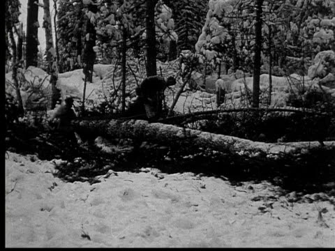 1927 b/w ws ms montage loggers cutting pine tree in forest, ontario, canada - hand saw stock videos and b-roll footage