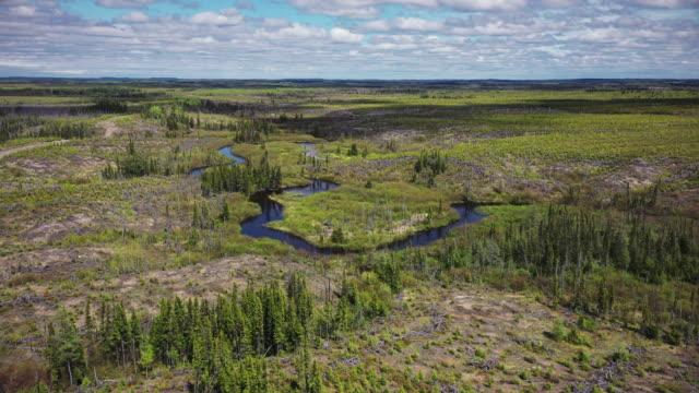 logging at northern quebec - 寒帯林点の映像素材/bロール