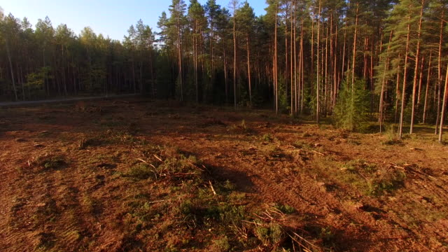 logging clear cut - ferito video stock e b–roll