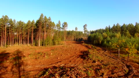 logging clear cut - forestry industry stock videos & royalty-free footage