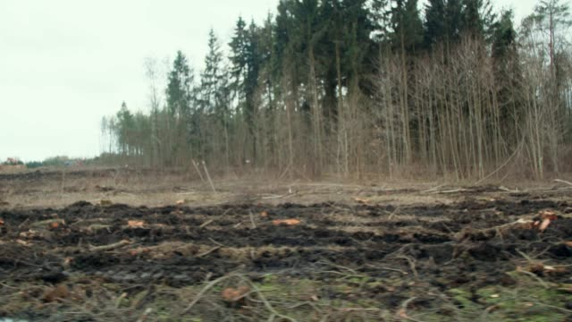 logging clear cut - paper mill stock videos & royalty-free footage