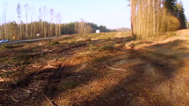 Logging clear cut