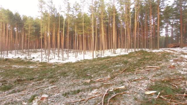 logging clear cut - destruction stock videos & royalty-free footage