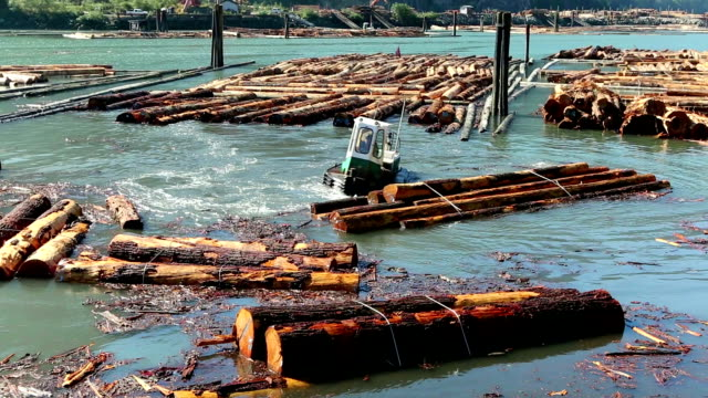 logging industry squamish - forestry industry stock videos & royalty-free footage