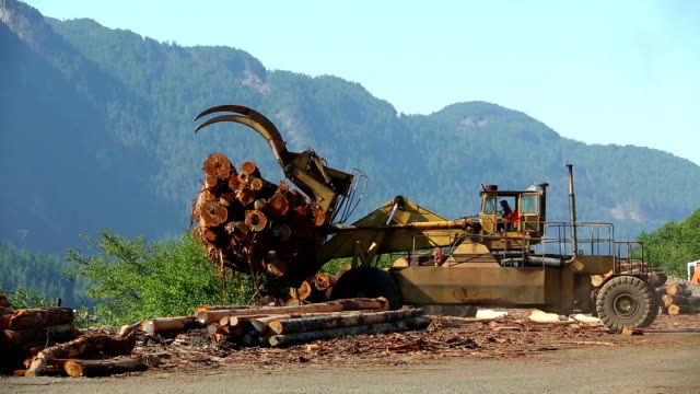 logging industry squamish - timber stock videos and b-roll footage