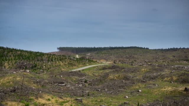 logging industry - time lapse - forestry industry stock videos & royalty-free footage