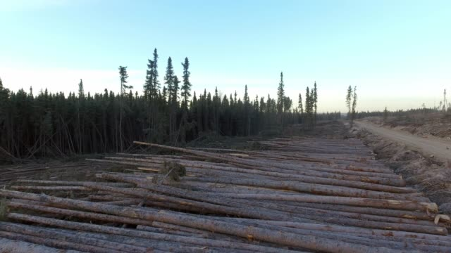 logging operation cut block - timber stock videos and b-roll footage