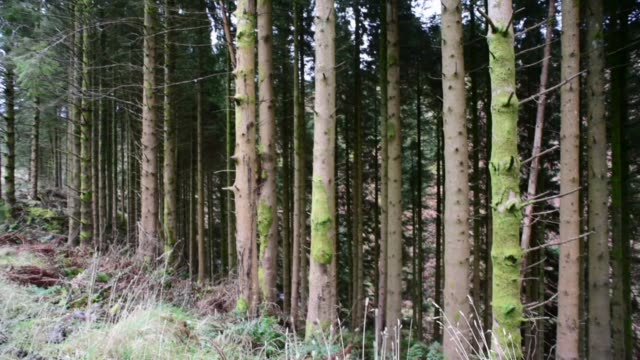 logging pines in the galloway forest. - david johnson stock videos & royalty-free footage