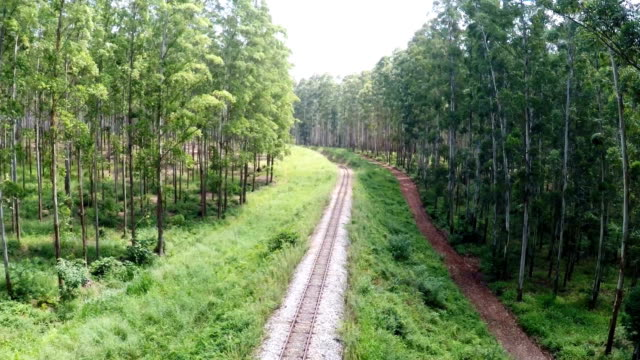 logging railway mpumalanga south africa - tramway stock videos and b-roll footage