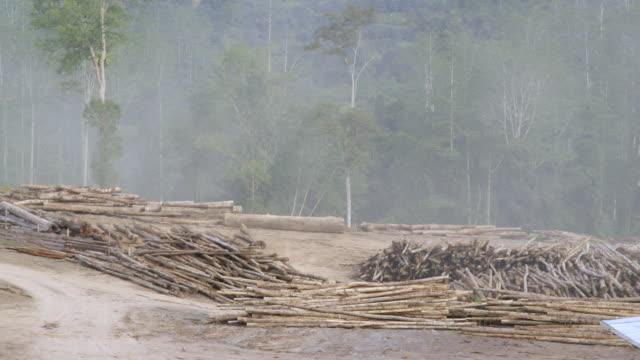 WS Logging yard with forest / Tawau, Sabah, Malaysia