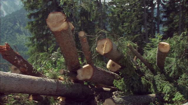 vidéos et rushes de ms pan logs and excavator in forest, tyrol, austria - pelleteuse
