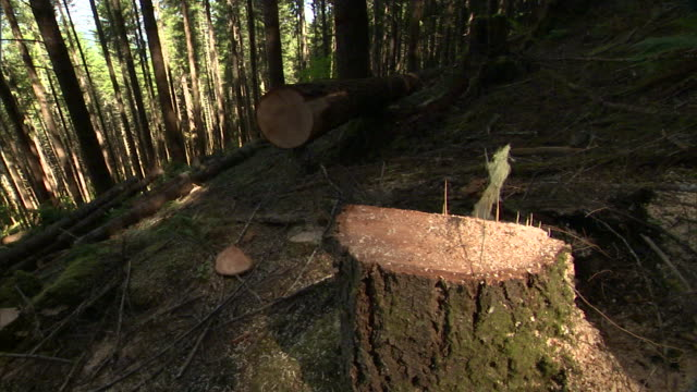 logs and stumps lie in a forest clearing. - cricket stump stock videos & royalty-free footage